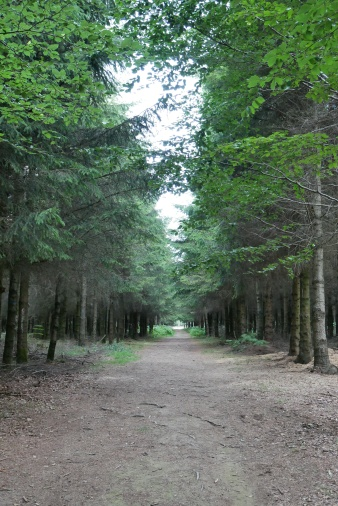 Bois de la Paix (Peace Forest) just outside Bastogne near Noville