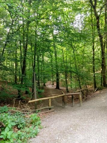The trails in Bois de la Cambre and Sonian Forest