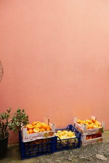 The lemons of Liguria