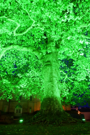 The massive (and well-lit) Liberty Tree which has stood next to the Bayeux Cathedral since 1797