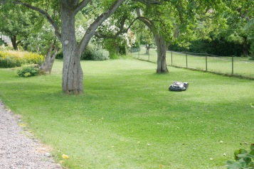 Lush green yards on Brännö  are well-kept thanks to the self-directed lawn mowers