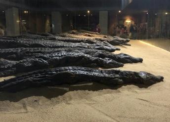 Mummified crocodile museum
