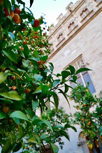 The Orange Garden in La Lonja de la Seda palace