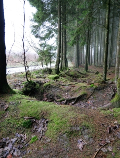 In the Ardennes Forest of Bastogne at one of the sites of the Battle of the Bulge during WWII