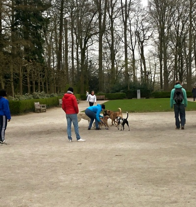 Dog walking in the days of a pandemic means appropriate social distancing by the humans