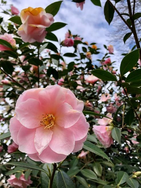 More flowers of Parc Tenbosch