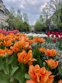 Spring blooms in Brussels